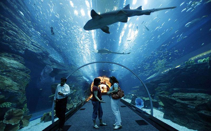 Dubai - Aquarium 1